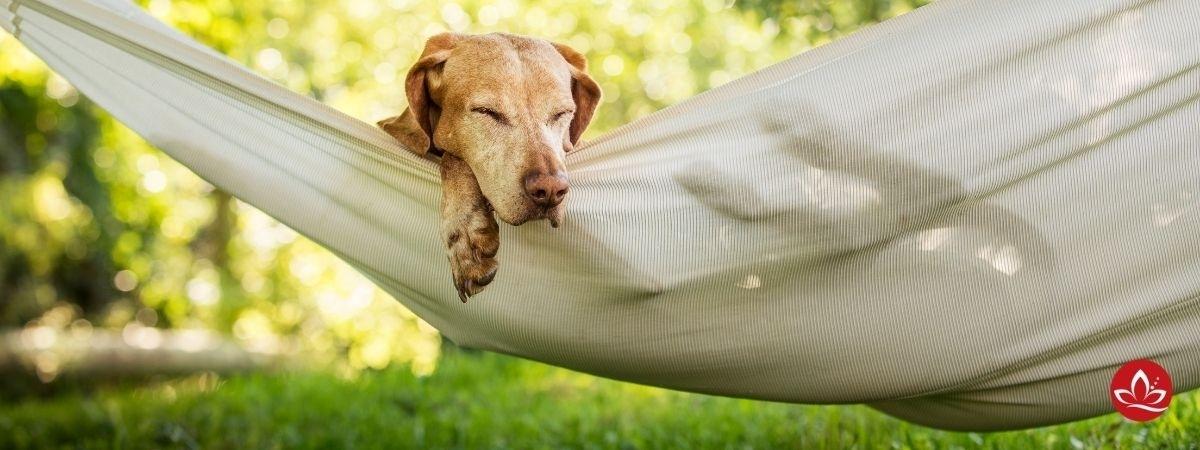 Hund in Hängematte