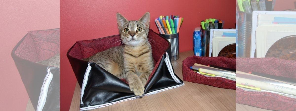 Katze im Körbchen
