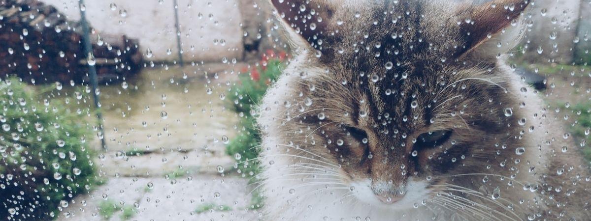 Katze im Regen, traurig