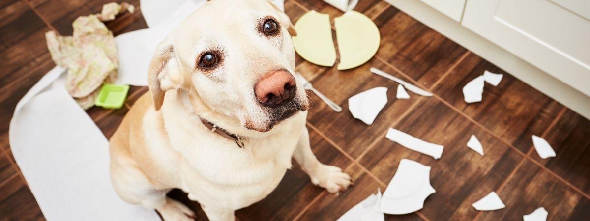 Hund schuldig Chaos