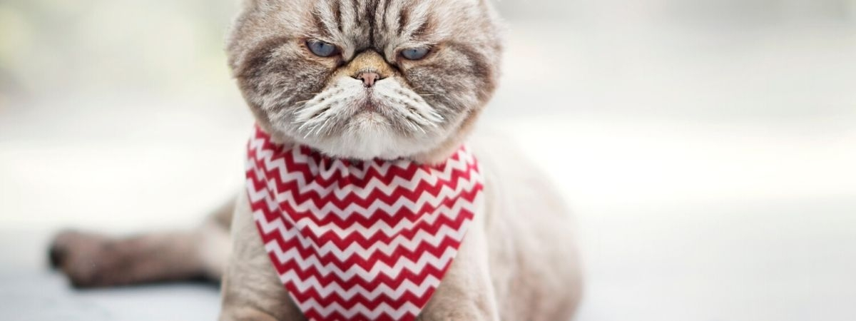 Katze schaut skeptisch