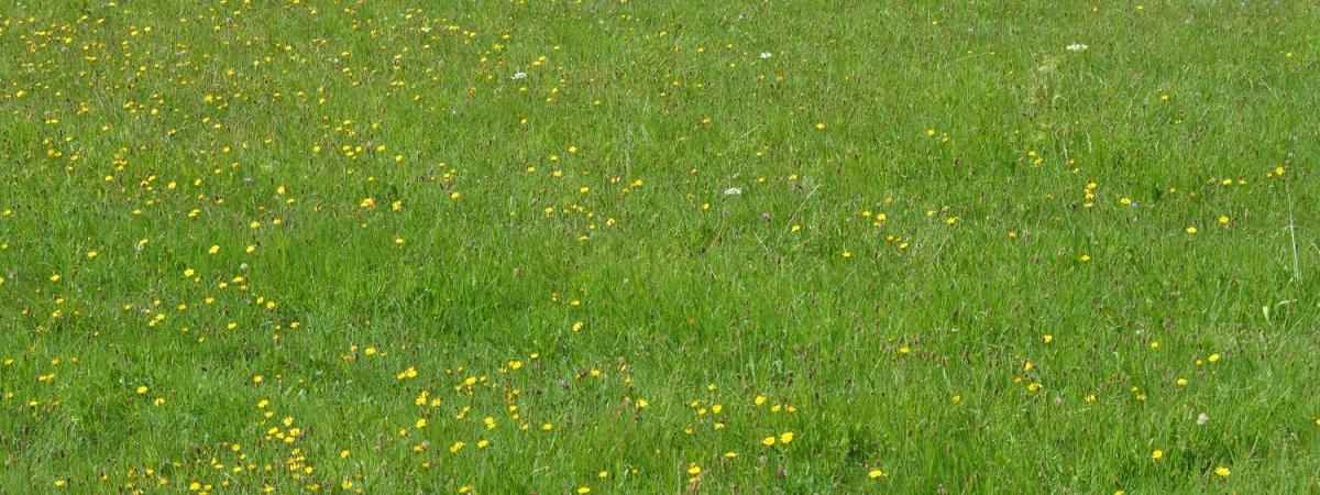 grüne Wiese